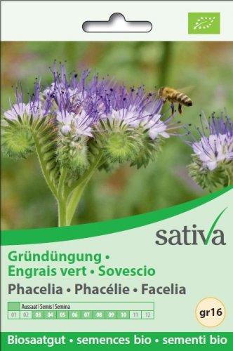 Sovescio Facelia - gr16