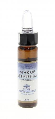 Star of Bethlehem - Fiori Mediterranei