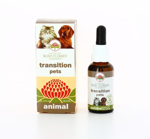 Transition Pets Animal