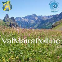 Val Maira Polline