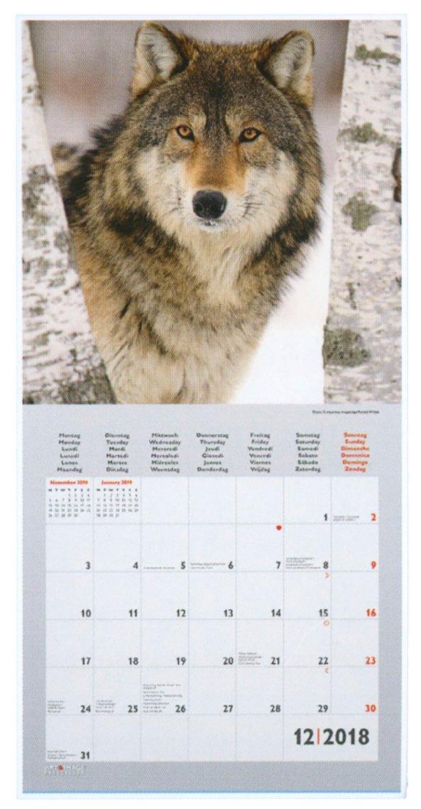 Calendario Wolves 2018 - Retro