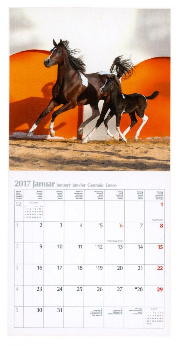 Calendario Horses Cavalli 2017