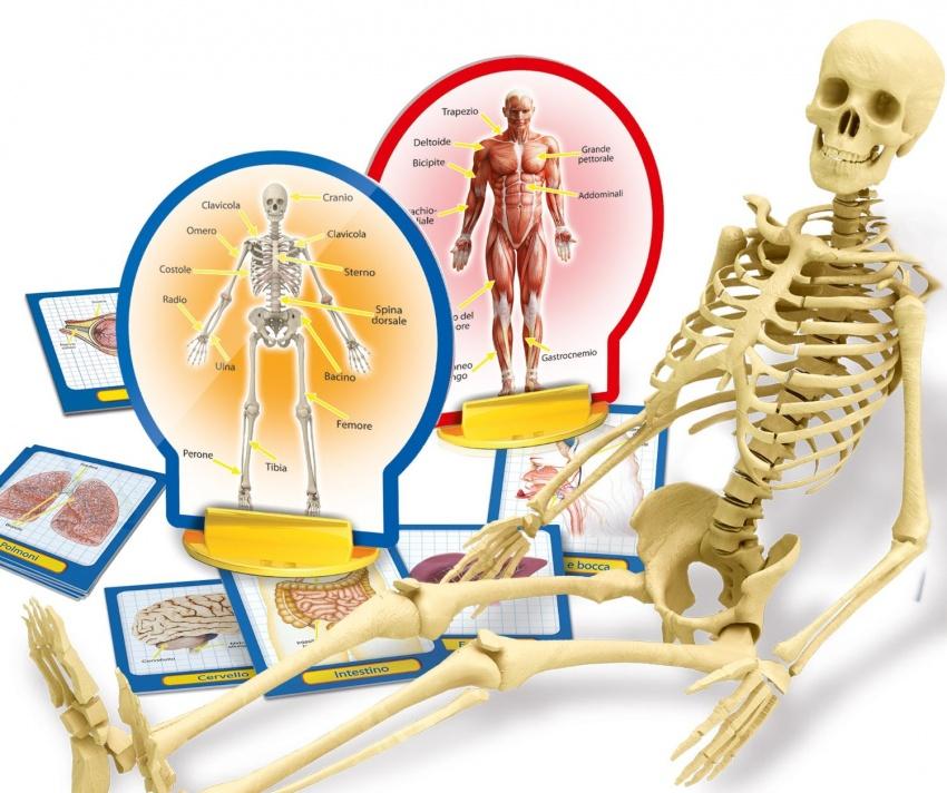 Scopri il Corpo Umano