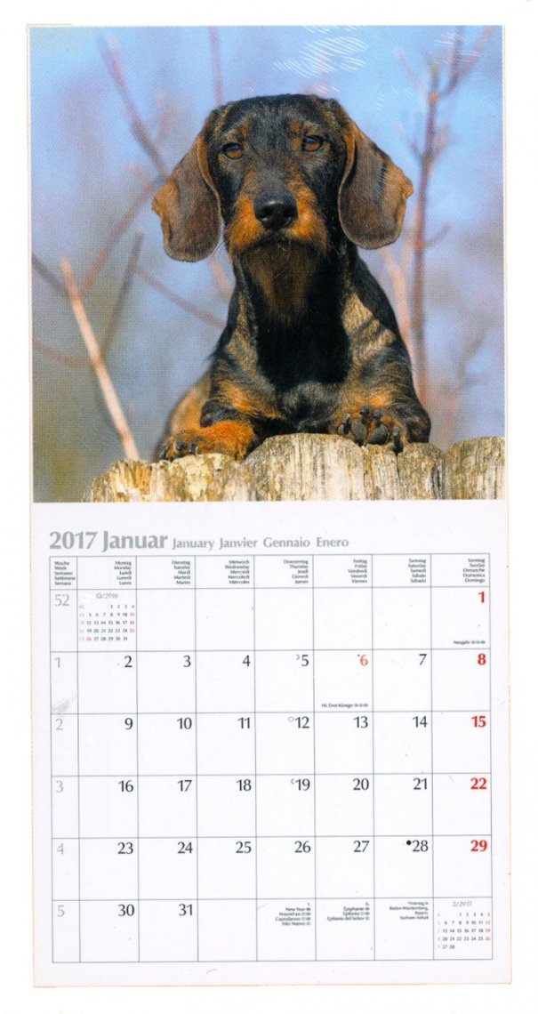 Calendario Dogs Cani 2017