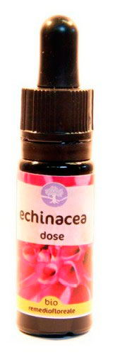 Echinacea Dose - Californiano