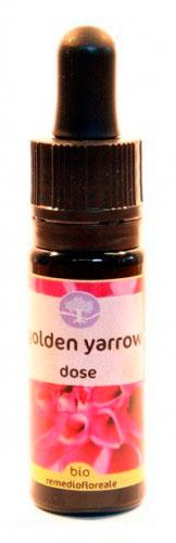 Golden Yarrow Dose - Californiano