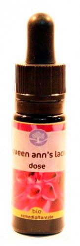 Queen Ann's Lace Dose - Californiano