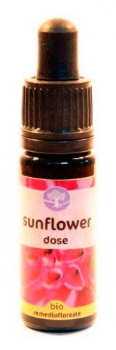 Sunflower Dose - Californiano