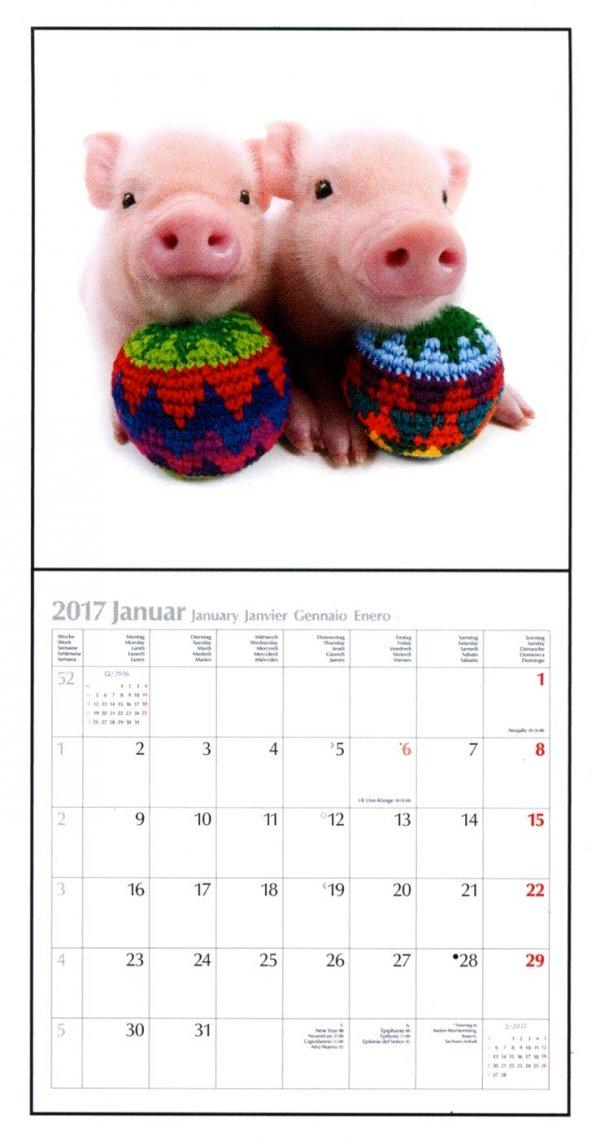 Calendario Maialini - The Pig 2017