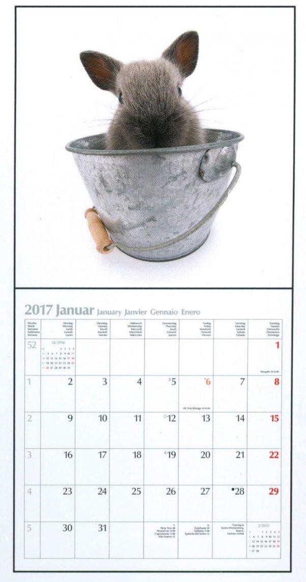 Calendario Coniglietti - The Rabbit 2017