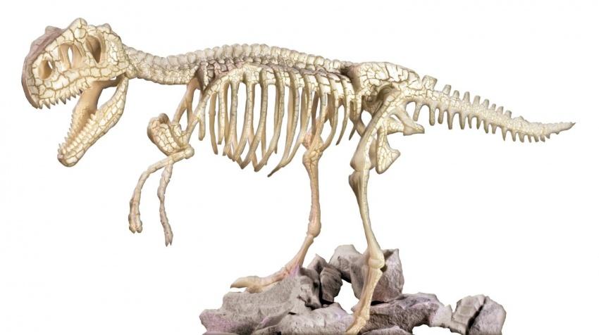 Il Tyrannosaurus Rex