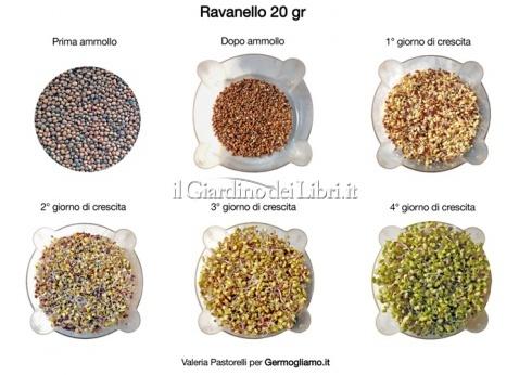 Semi per germogli bio di Ravanello Rosa