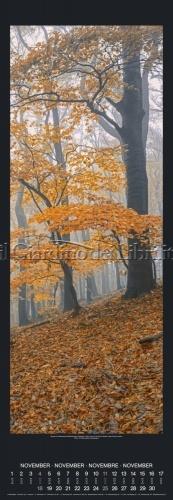 Calendario Bäume Trees 2018 - Grande Formato - Aperto