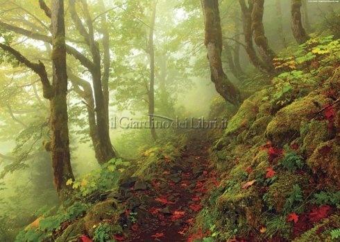 Puzzle Path - Magic Forests - 1000 Pezzi