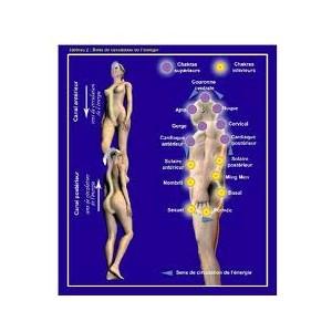Poster Di Anatomia Sottile