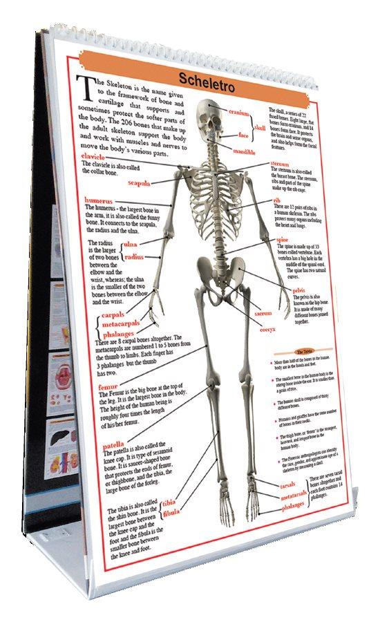 L'Anatomia del Corpo Umano