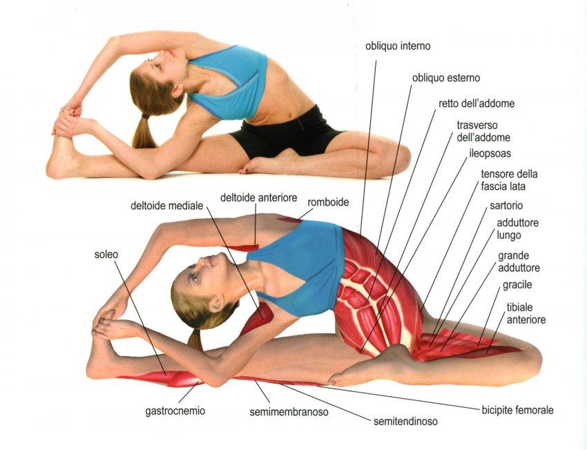 Anatomia dello Yoga - Interno
