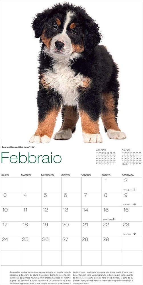 Calendario da Muro 2020 Cani