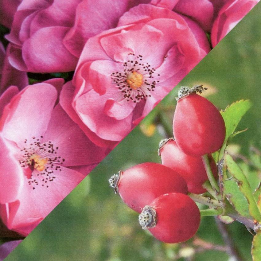 Bioprotettiva - Siero Intensivo alla Rosa Mosqueta