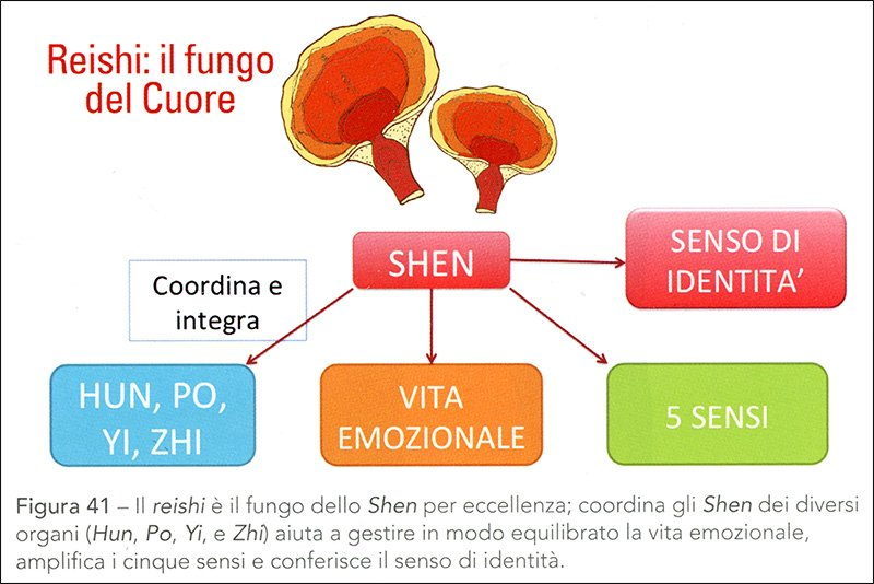 Menopausa la Via Naturale - fungo Reishi