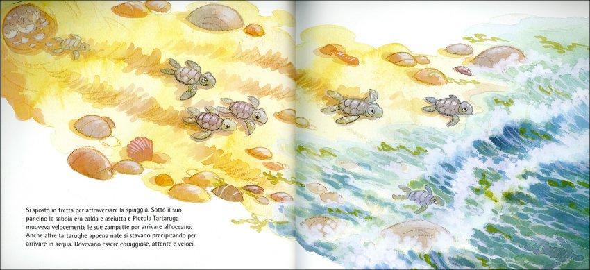 La Piccola Tartaruga Coraggiosa - La tartarughina cerca di raggiungere l'oceano