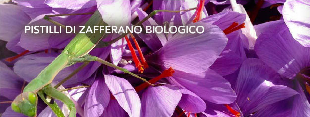 Zafferano Biologico