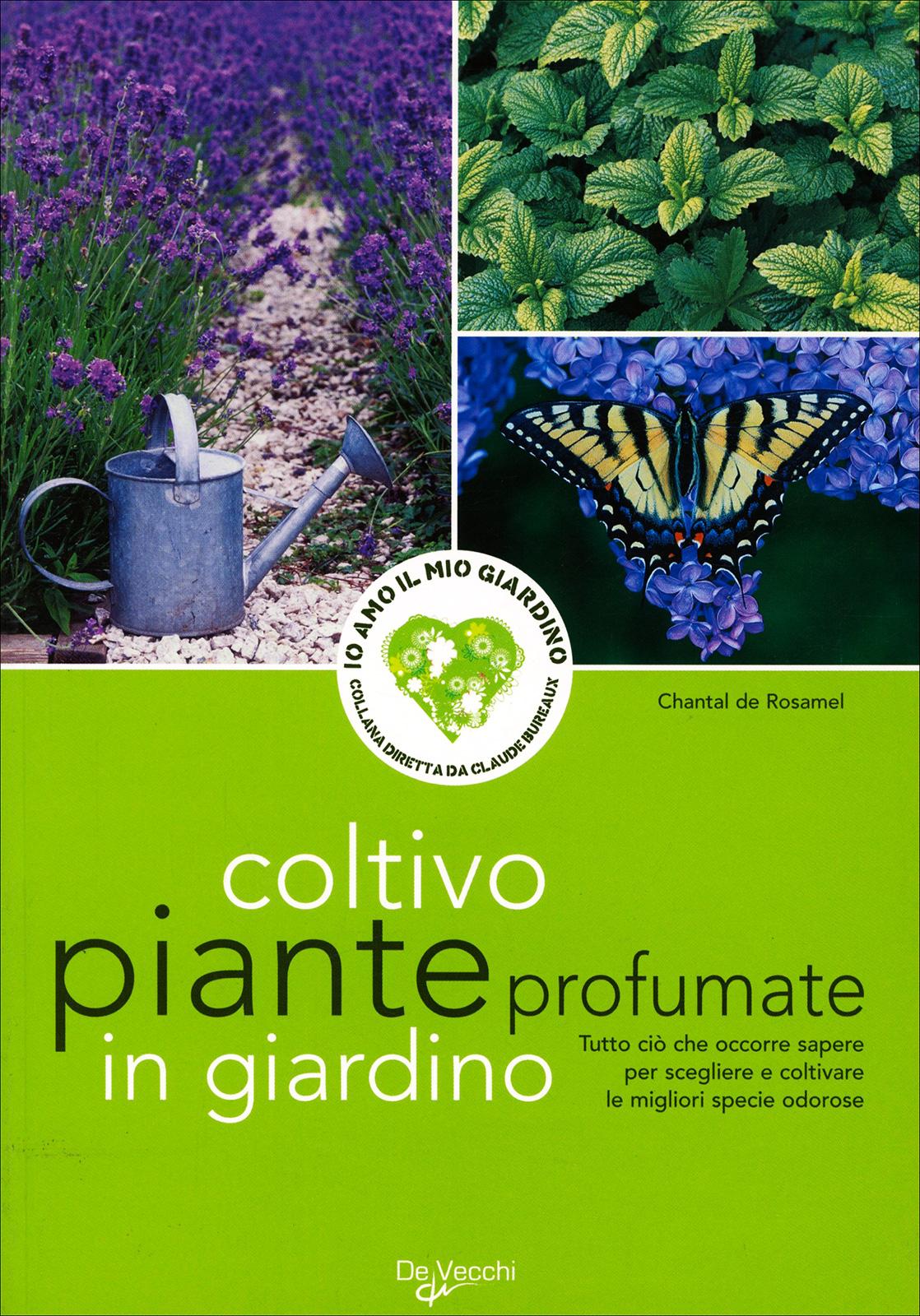 Piante profumate da giardino simple eucalipto azul australiano profumato in vaso cm with piante - Piante da giardino profumate ...