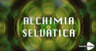 Alchimia Selvatica - Omaggio Video