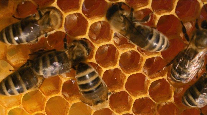 apicoltura-biologica-sostenibile