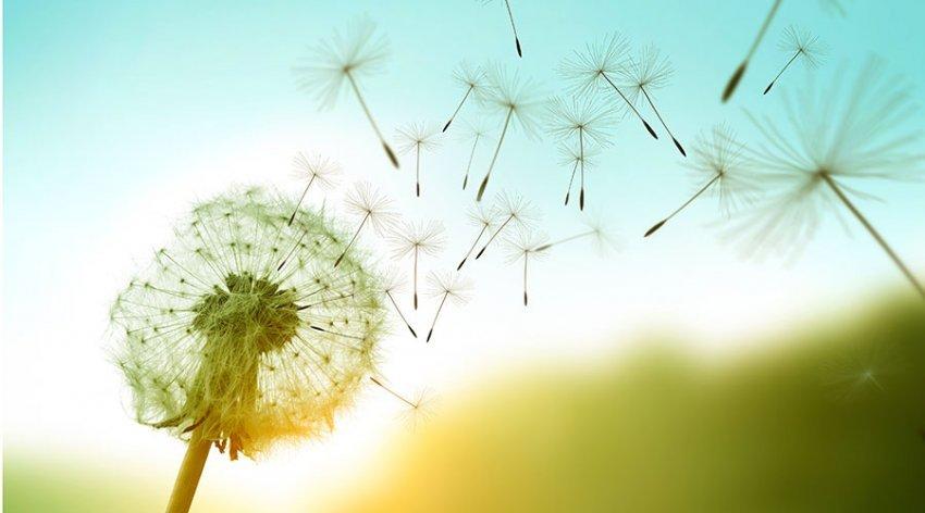 crescita-collettiva-umana-spirituale