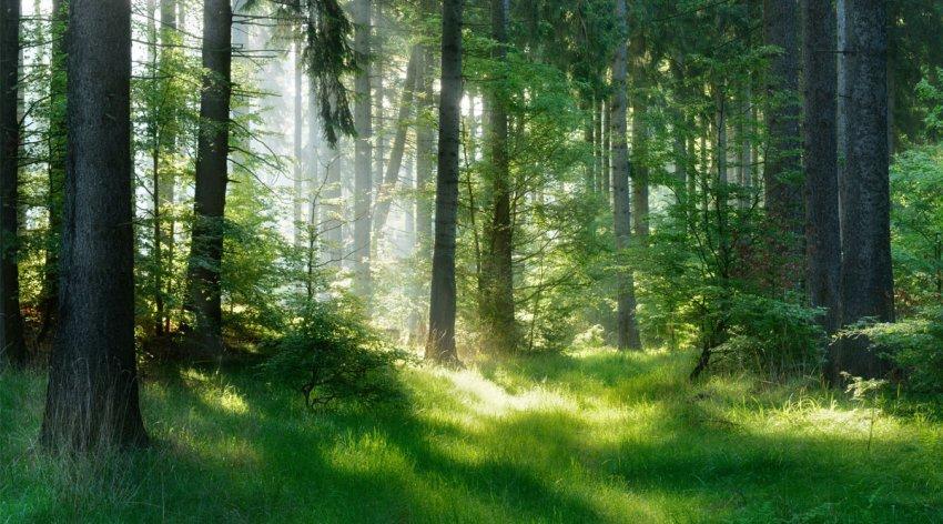 Shinrin-Yoku meditazione nel bosco