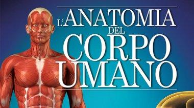 L'Anatomia del Corpo Umano - Lo scheletro
