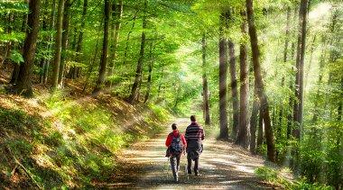 Camminare fa bene: lo Shinrin Yoku fa ancora meglio!