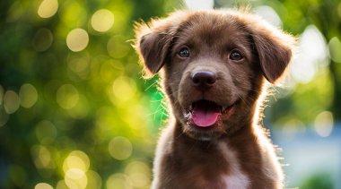 Come educare un cane: correggi il cucciolo così coi 3 consigli dell'esperta