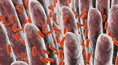 Cos'è l'Intestino Permeabile? Abbi Cura della tua Salute e Proteggiti dalle Patologie Autoimmuni