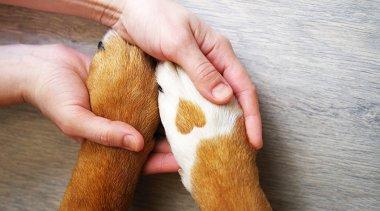 Pet Therapy: perché gli animali ti fanno bene?