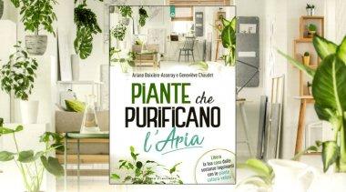 La capacità delle piante di depurare l'aria di casa