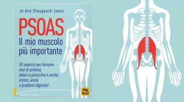 Muscolo Psoas: un elemento fondamentale del corpo
