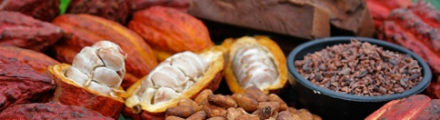 Pranaciok: 100% Cacao Criollo del Perù